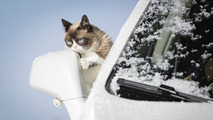 Grumpy Cat 2017 Opel calendar shoot