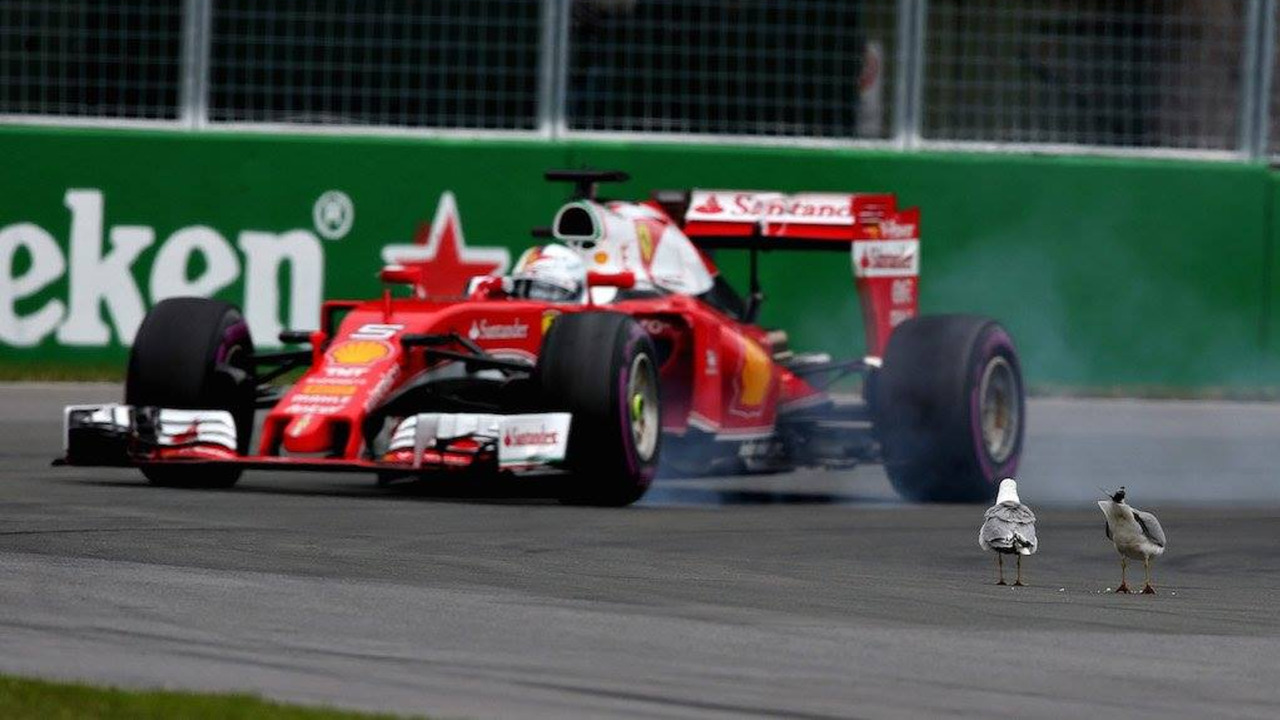 "Vettel: Suicidal seagulls were ""worst moment of my race"""