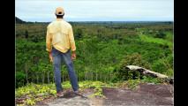 Peugeot und Regenwald