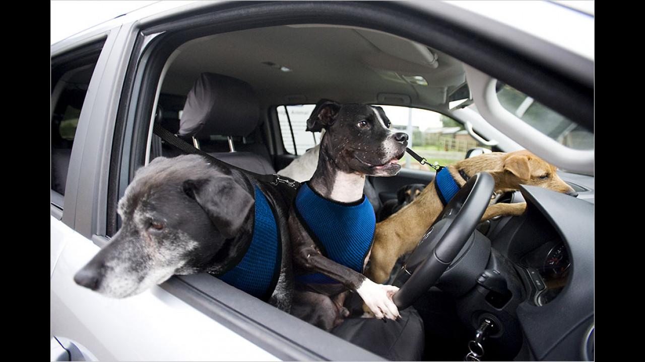 Volkswagen England: Rettungshunde fahren Auto