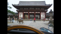 Rally Nippon 2009 - Giorno 4- Ecco i famosi daini di Nara, sono ovunque, e non spaventano neanche per il nostro rumoroso passaggio.JPG 799K   Visualizza   Scarica