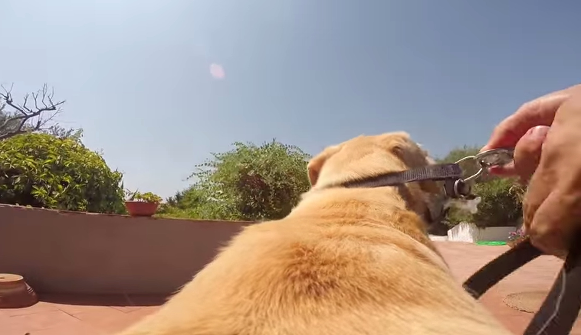 Is this Dog the Ultimate Ride? [Video]