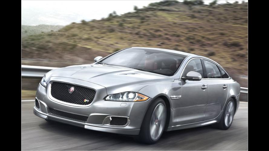 Jaguar XJR: Bären-Katze