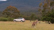 Volvo kanguru tespit sistemi