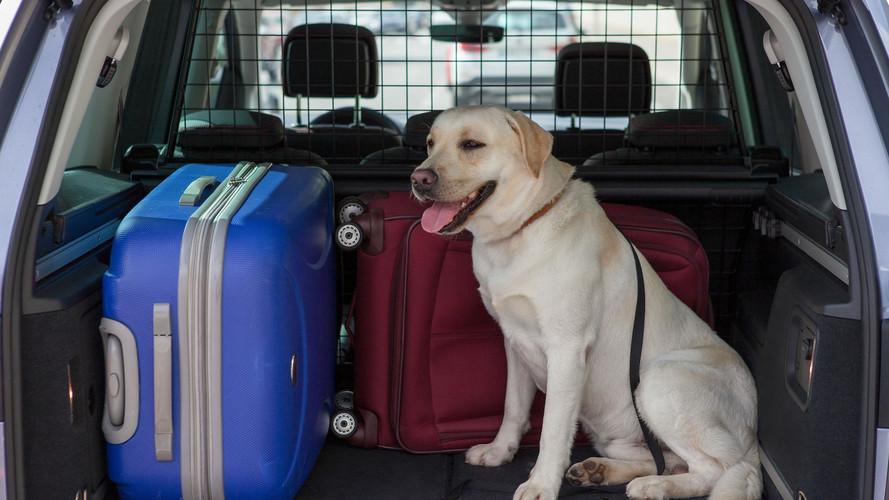 Consejos para viajar con perros en el coche
