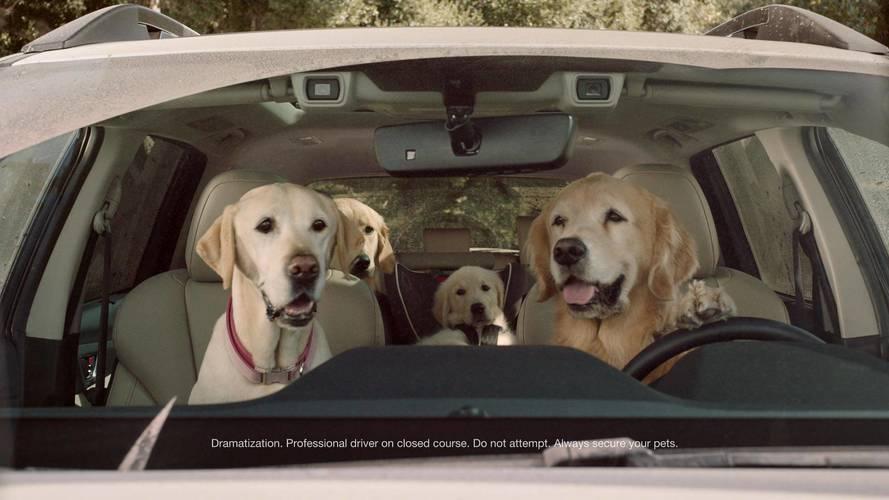 Subaru Barkley's Dog Ads