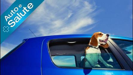 Come si trasportano cani, gatti... e altri animali in auto